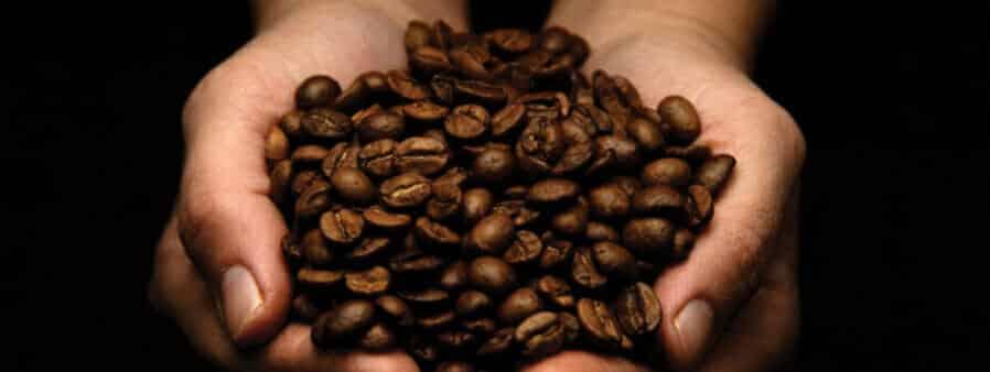 tips om beste koffie bonen te kiezen
