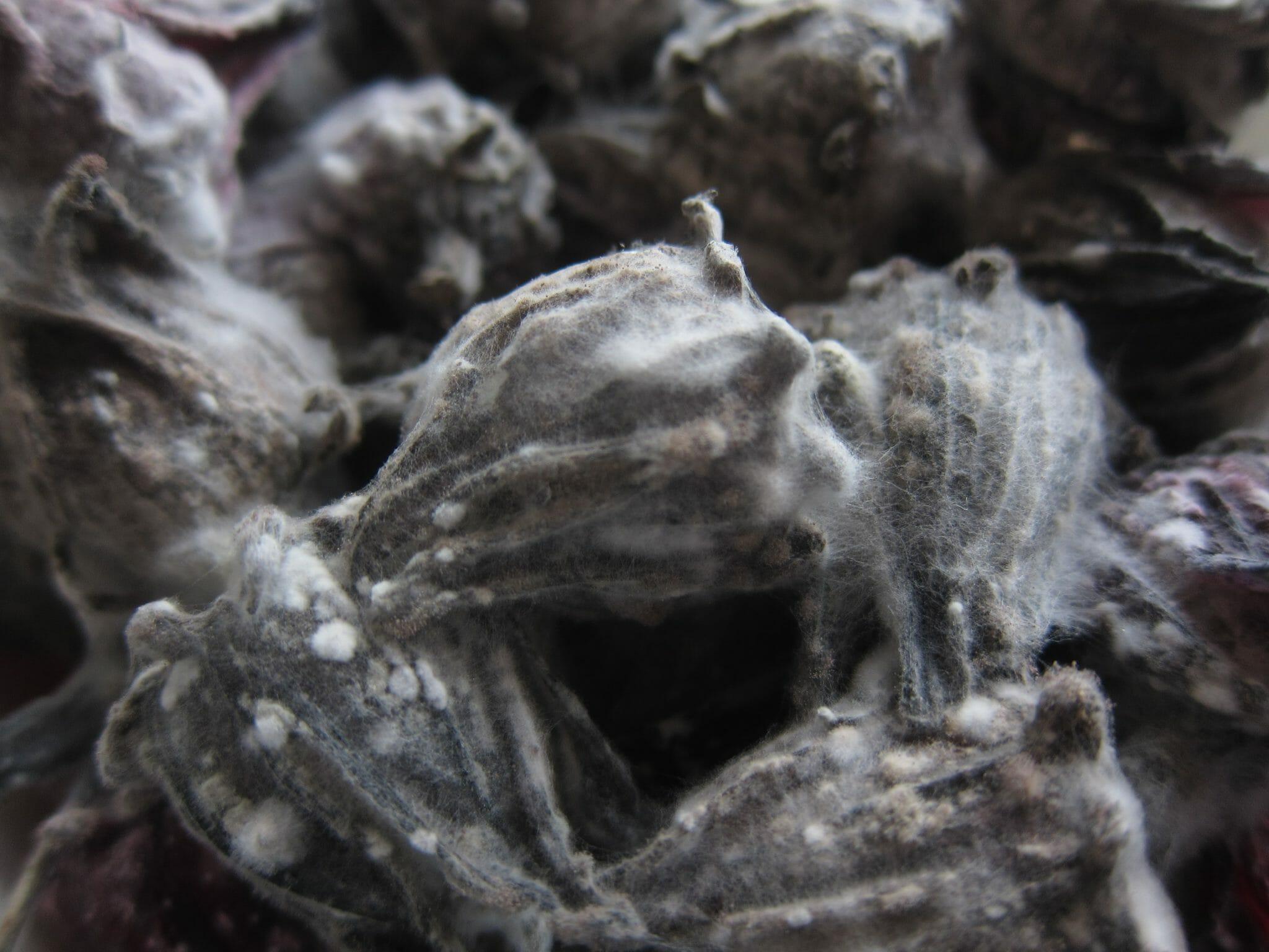 Wat zijn mycotoxinen
