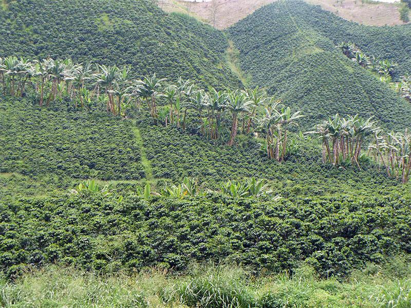 Colombiaanse koffieboerderij