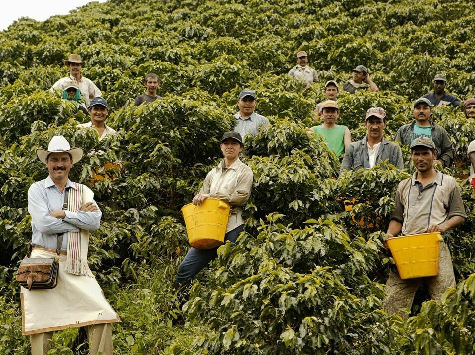 Colombiaanse koffieplukkers