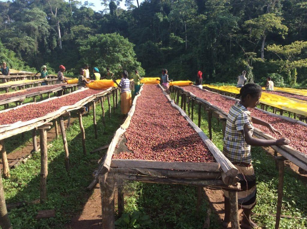 ethiopische beste koffiebonen