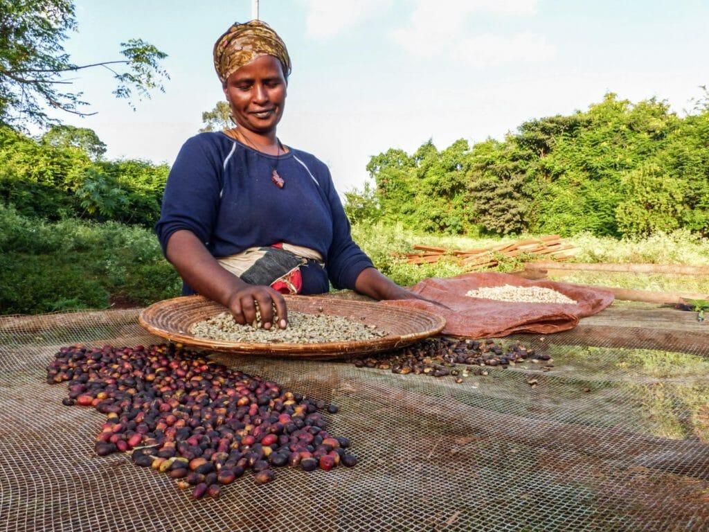 ethiopische koffie beste soorten