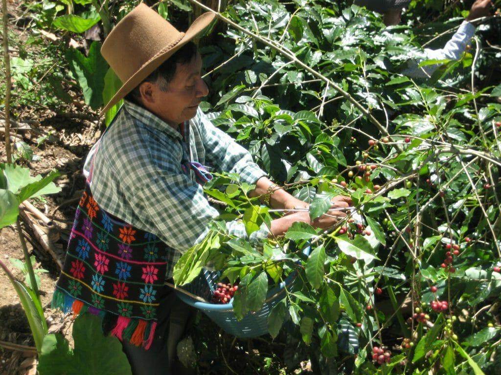 koffie bonen beste smaak guatemalaanse koffie