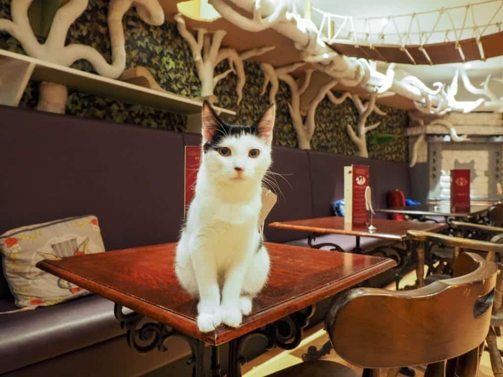 Lady Dinah's Cat Emporium | Londen