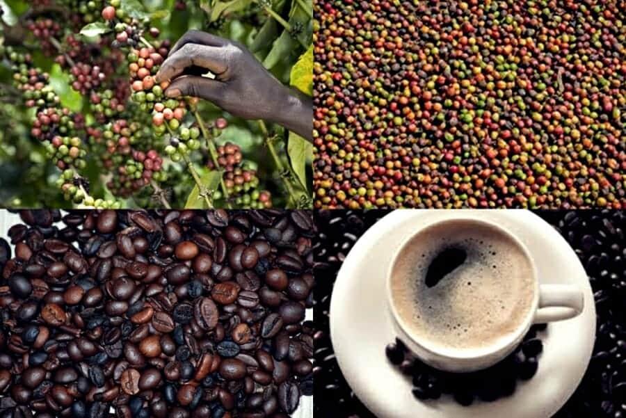 Keniaanse koffie