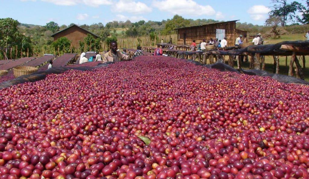koffie uit ethiopie