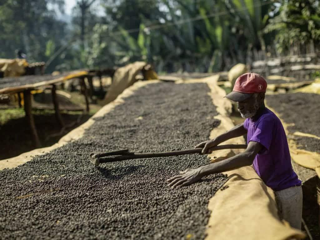 koffie uit ethiopie bonen
