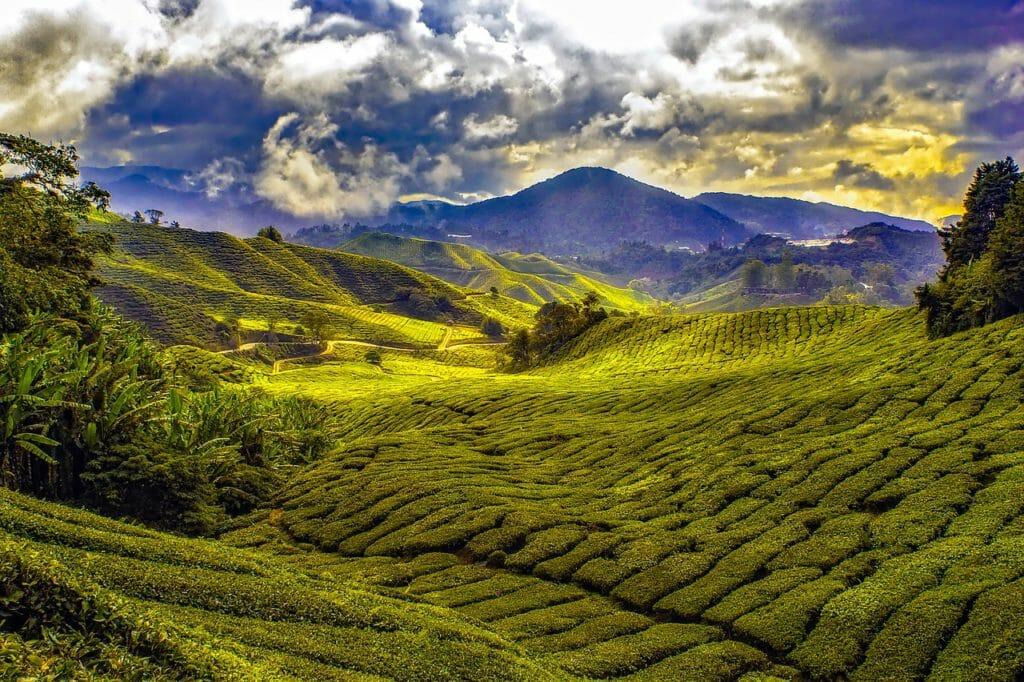 koffie uit sumatra
