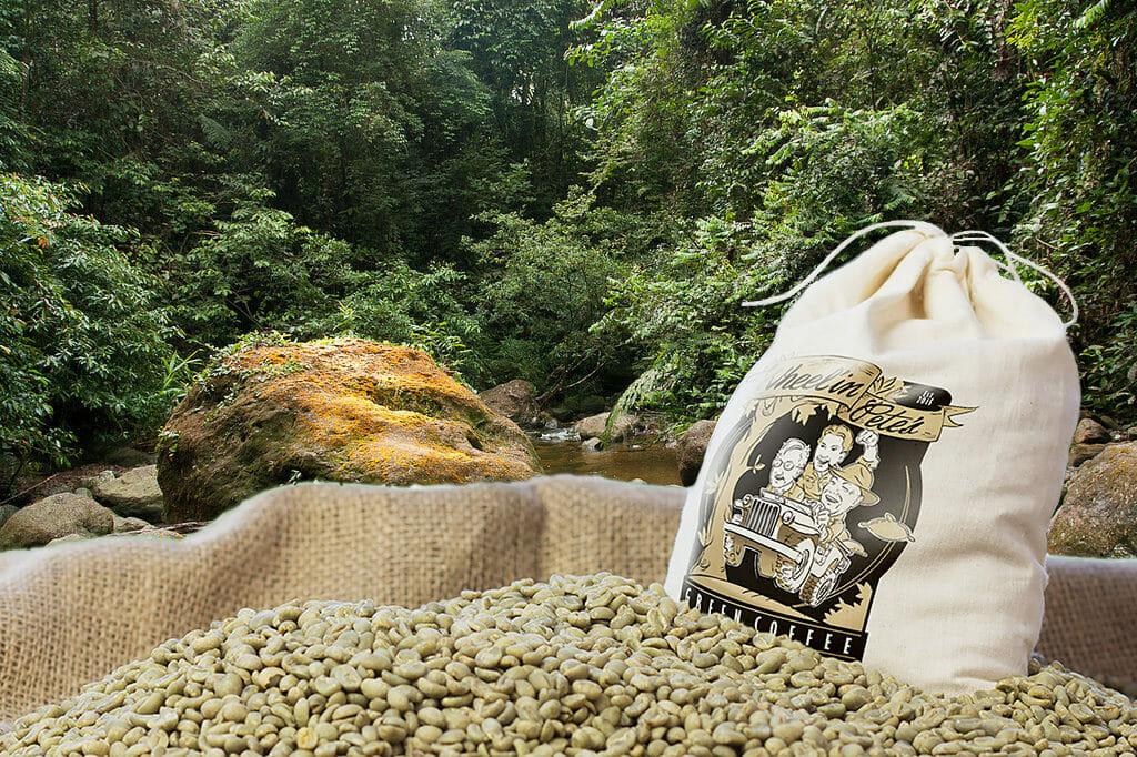 sumatraanse koffie groene koffie
