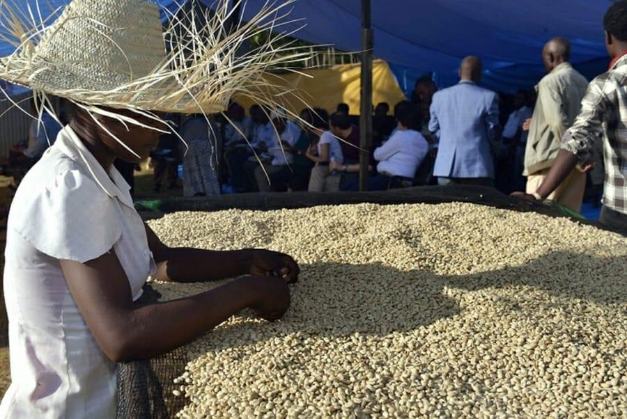 Verwerking Ethiopische koffie