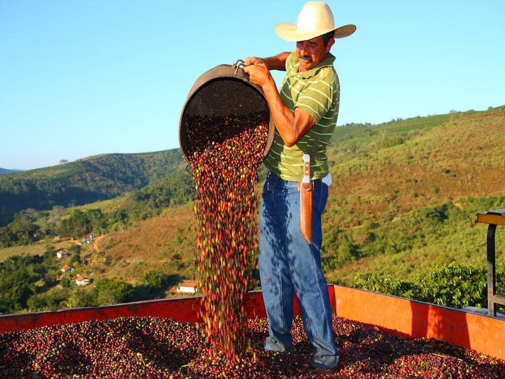 Braziliaanse koffieboer