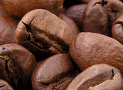 Wat is het verschil tussen arabica en robusta koffie?